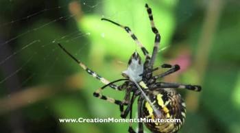 Crystalline Silk | Creation Moments Minute