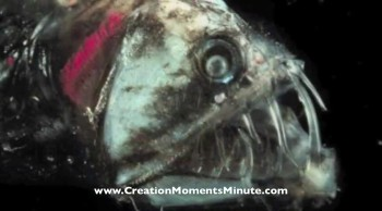 The Red-Eyed Sniper Fish