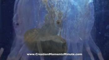 The Brainy Jellyfish