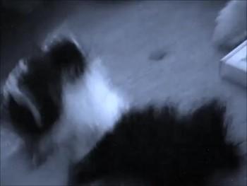 Webkinz dramatics- Do You Want To Build A Snowman?