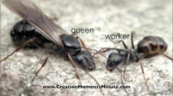 The Lowly Ant Had Charles Darwin Confused
