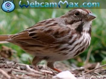 Eye of The Sparrow sung by Hammy Hazells