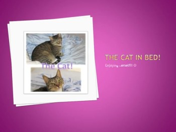 the cat pictures slide show -- 4-415- 0
