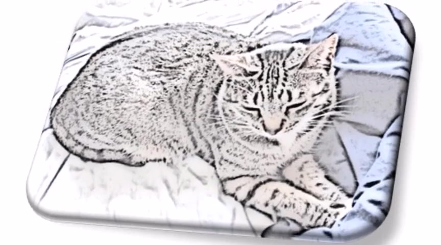 the cat pictures 001 video 42015