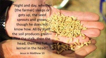The Parable of the Seed (and the Science of Germination)