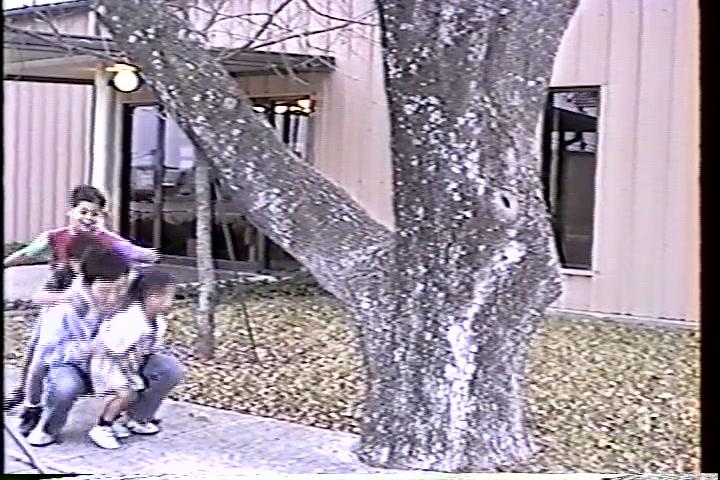 Tree Climbing and Hopping Like Kangaroos