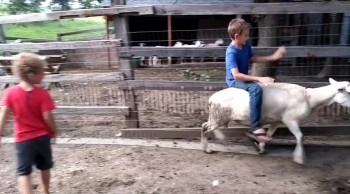 How to Catch a Chicken and Ride a Sheep | Burykin Family