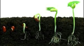 THE SEED OF POSSIBILITY!