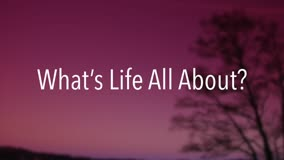 What's Life All About?