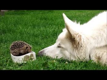 Honey with a little hedgehog
