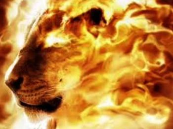 The Lion of Judah is Roaring