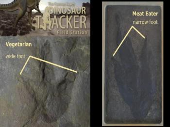 Cannon Beach Dinosaur Tracker Field Startion (A Creation Museum)