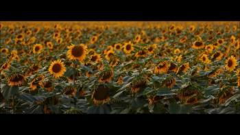 Mr.GospelRock - Like a Flower in the Field