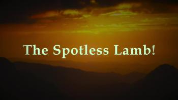 The Spotless Lamb!
