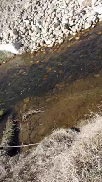 Creek, water running