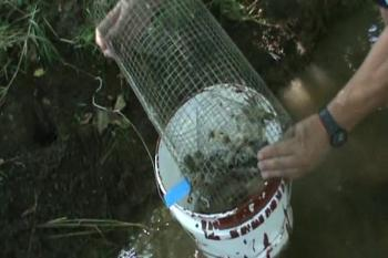 Checking the Crayfish traps Part 2