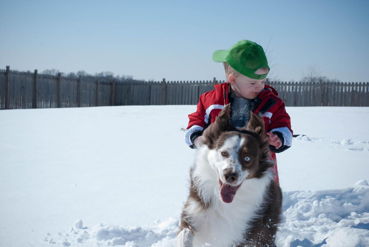 Snow dog!
