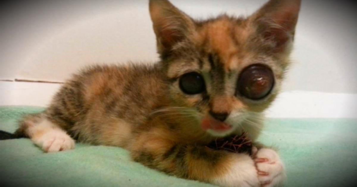 Mean Eyed Cat Owner
