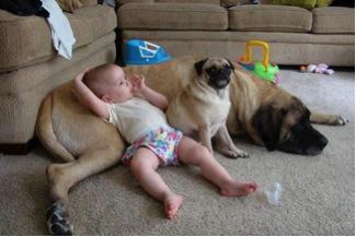 Baby and pug recline on a big dog