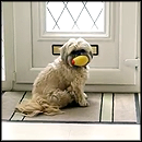 Excited Dog Does Something Hilarious When the Mail Comes