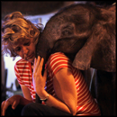 13 Pictures of an Orphaned Elephant Will Melt Your Heart