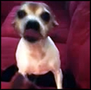 Dog Goes Absolutely CRAZY Over a Dog Treat