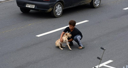 A Boy Helps a Desperate Dog in Need - an Incredibly Touching Photo