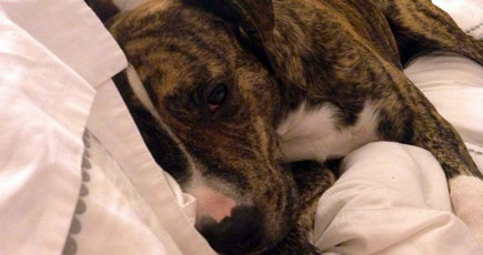 Missing Dog Reminds Us to be Thankful for the Kindness of Strangers