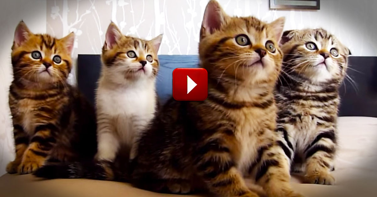 Hilarious Dancing Cats Will Make Your Day Pictures Of Cats