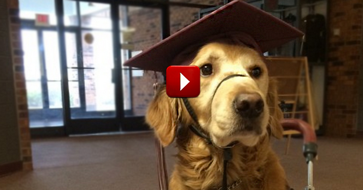 A Loyal Service Dog Will Walk His Human Across the Stage. . . Wearing a Cap and Gown!