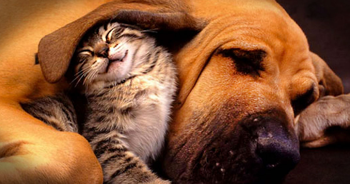 10 Pictures of Extremely Unusual Animal Friendships