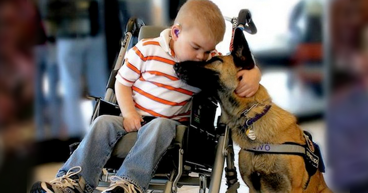 Dying Boy's Bond With a Dog That Will Break Your Heart