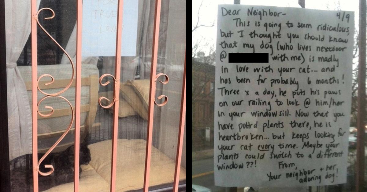 Houseplants Nearly Killed True Love. Until Neighborly Love Prevailed!