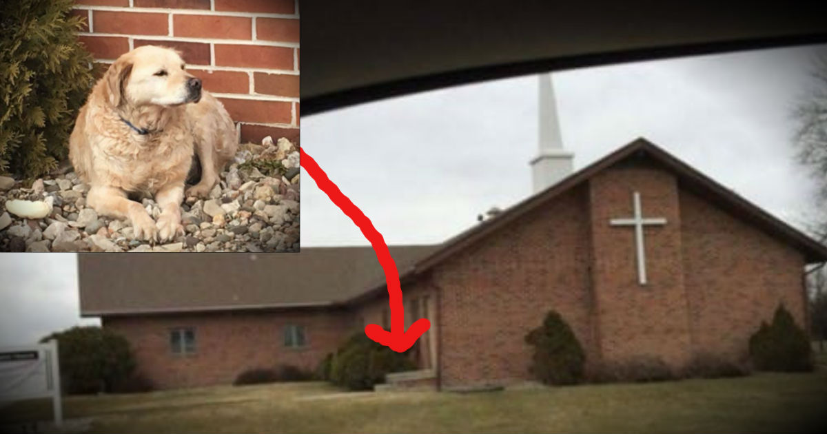 Abandoned Dog Left Outside Of A Church Gets A Happy Ending!