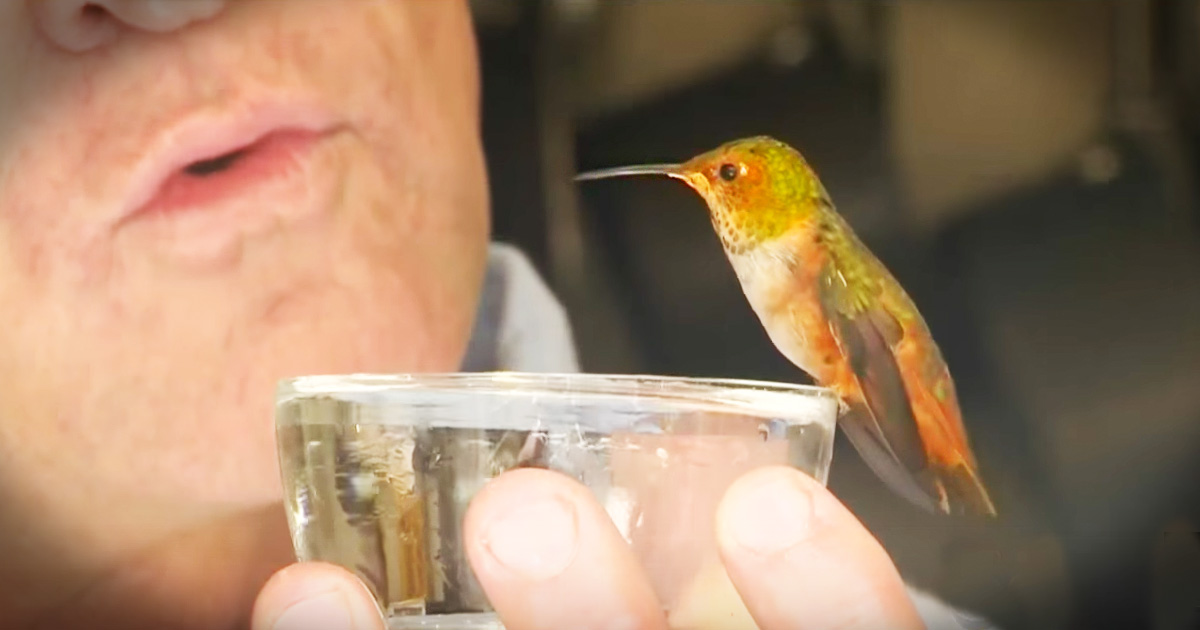 Rescue Dog Becomes Rescuer To Hummingbird Thought Dead