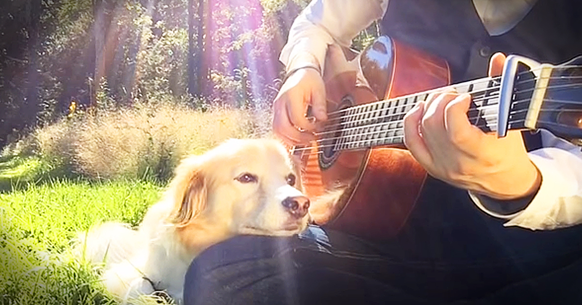 Man And Dog Play Touching Acoustic Guitar Rendition Of Gene Wilder's 'Pure Imagination'
