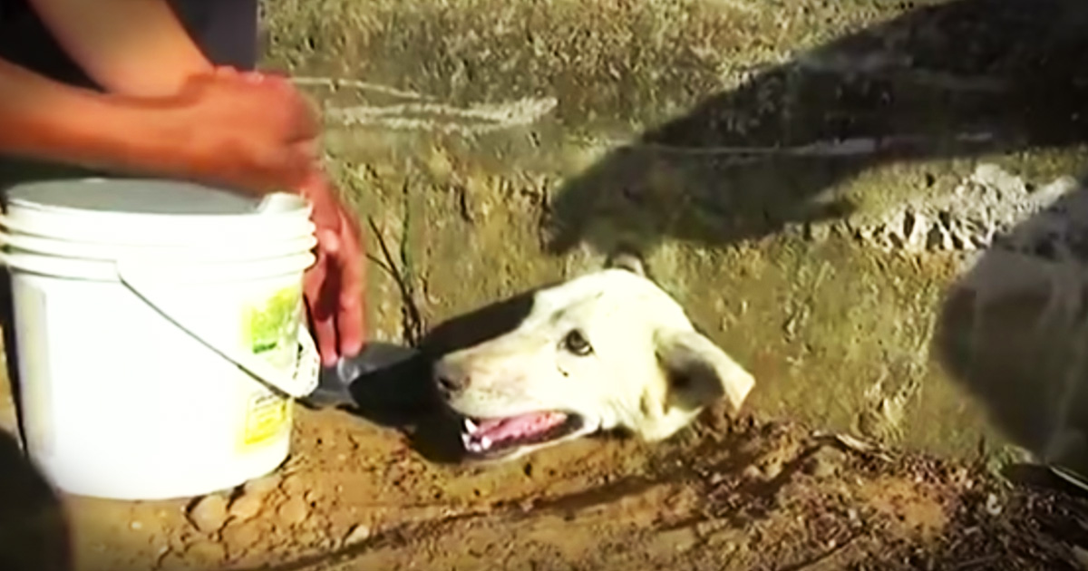 Dog With His Head Stuck In A Wall Gets A Nail-Bitting Rescue