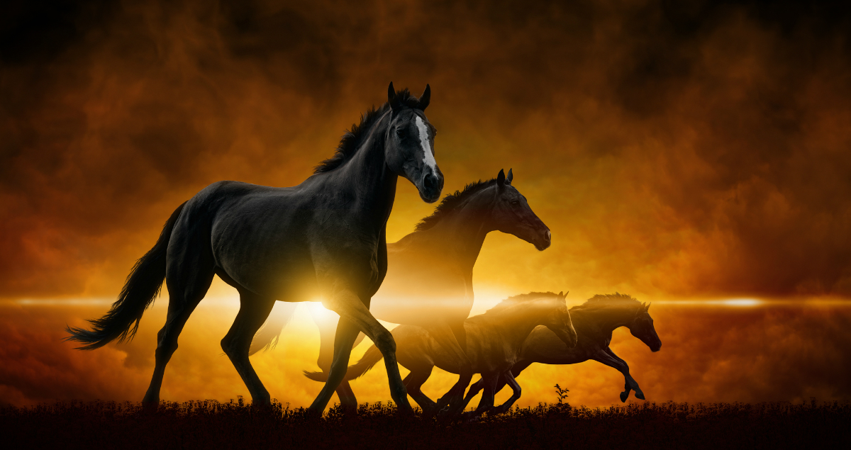 A Pastor Explains The 4 Horses Of The Apocalypse And Why