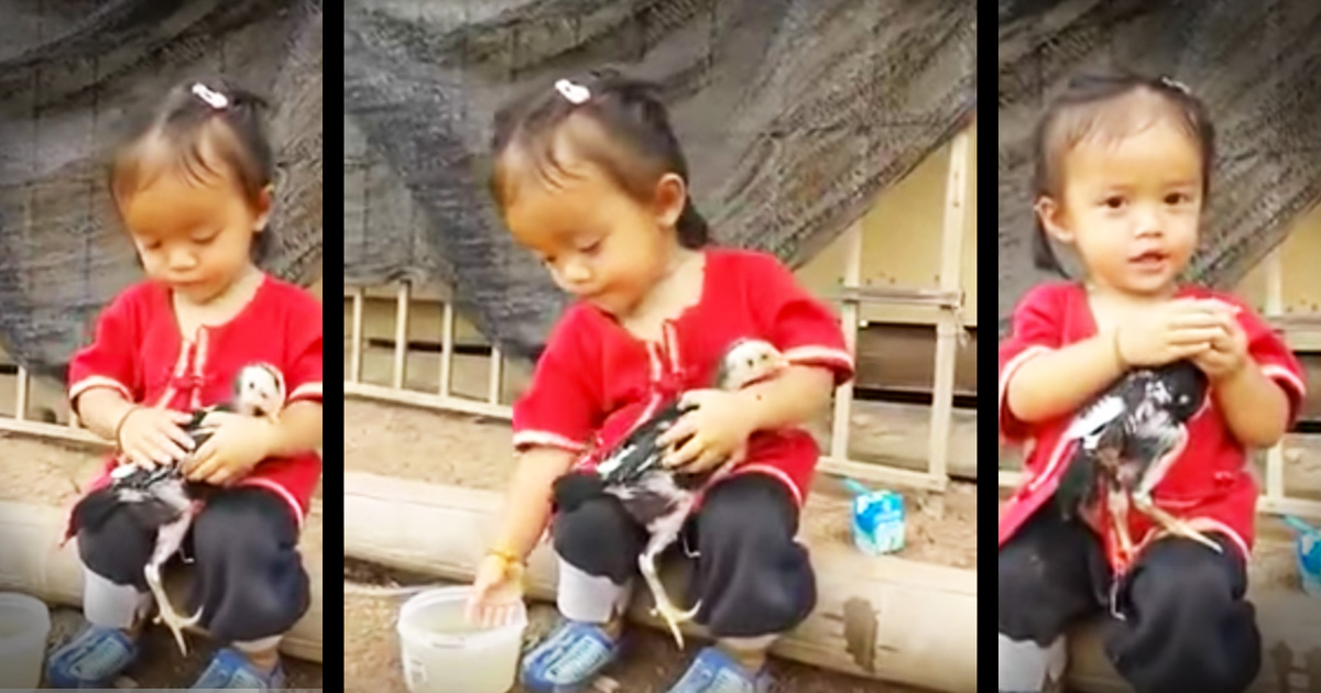 Sweet Baby Girl Bathing A Chicken Is The Cutest Thing